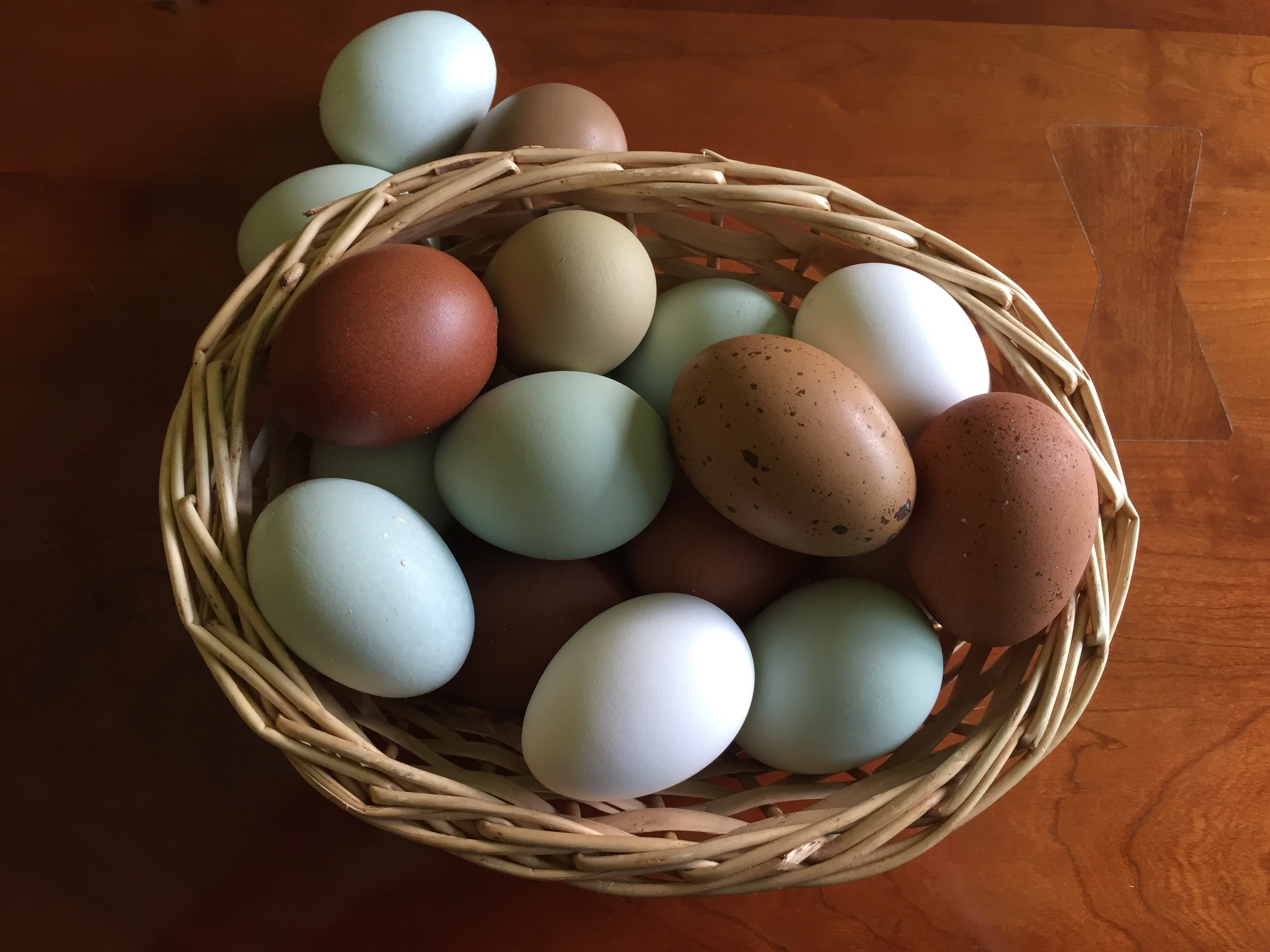 Heritage Variety Eggs at Steed and Company Lavender